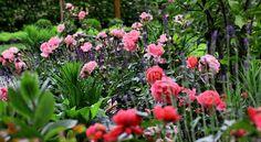 Rosen, Lavendel und Co ... - Bilder und Fotos