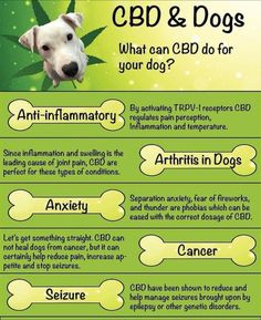 Using cbd oil for dogs health is one of the best ways to keep your dog free from any pain associated with arthritis, cancer, lupus or any other symptom's your dog may have.