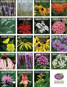 Native plants of Ontario Canada nursery including Trees, Shrubs and pollinator friendly herbaceous perennials