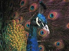 Close Up Nature Photography - Bing Images