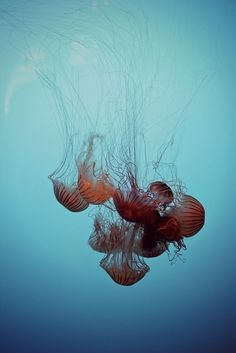 Cluster of Jellyfish Underwater Creatures, Underwater Life, Ocean Creatures, Life Aquatic, Sea World, Ocean Life, Deep Sea, Marine Life, Under The Sea