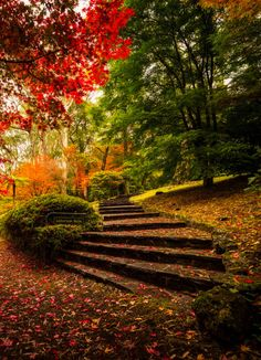 "coiour-my-world: "" Laburnum Steps, Mt Wilson, NSW, Aus ~ by Kevin Montesinos """
