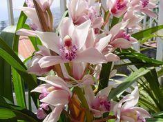 Orquídeas são lindas, mas necessitam de cuidados. Vejam quais: Salsa Com…