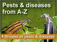 Pest and Disease Detective with earth-friendly solutions.