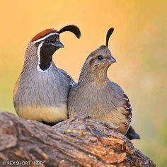 Csodálatos madárvilág fényképe.