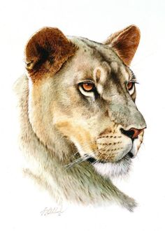 PORTRAITS OF THE BIG CATS 4