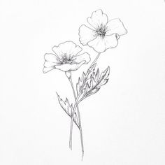 drawing // poppies // doodles