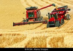 """A Case IH combine harvests wheat while unloading """"on-the-go"""" into"""