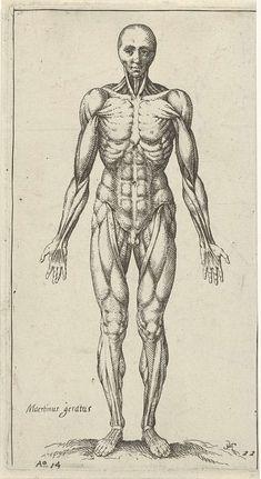 Pieter Feddes van Harlingen | Spieren in het mannelijk lichaam, Pieter Feddes van Harlingen, 1614 |