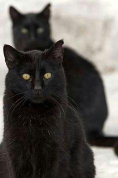 Black cats ♥ Love them ♥
