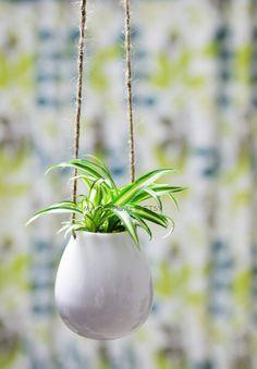 Hey, ho trovato questa fantastica inserzione di Etsy su https://www.etsy.com/it/listing/173091875/spider-plant-in-white-ceramic-hanging