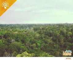 Você sabia? O Jardim Botânico Adolpho Ducke, de Manaus, é um dos maiores do mundo! Ele tem mais de 5 km² de área. Você já conhece?