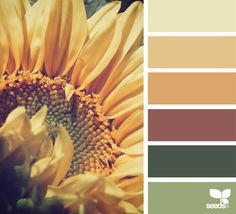 sunflower hues image via: Fall Color Schemes, House Color Schemes, Fall Color Palette, Colour Pallette, House Colors, Color Combos, Sunflower Colors, Design Seeds, Color Stories