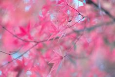 Foliage. I have developed as it is reflected in the pink, so why.