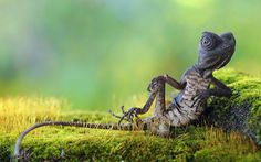 Best of the Week Cute Animal Pictures - Cutest Paw Fluffy Animals, Animals And Pets, Baby Animals, Cute Animals, Photo To Art, Mundo Animal, Reptiles And Amphibians, Oui Oui, Cute Animal Pictures