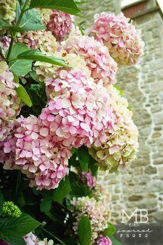 BELDECOR: Hommage à l'hortensia  Just gorgeousness...  ♥ :::*~*:::♥