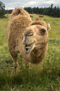 Mona the Camel, photo courtesy Kathleen Ballard