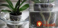 Cesnak je pre orchideu hotovým zázrakom: Ak vám dlho nekvitla, vezmite 3 strúčiky a skúste tento tip, čoskoro sa objavia prvé puky! Orchid Care, Ikebana, Beautiful Gardens, Bonsai, Indoor Plants, Terrarium, Gardening Tips, House Plants, Flora