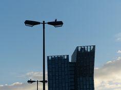 Tauben schauen den tanzenden Türmen auf der Reeperbahn zu.