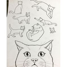 Instagram media daria486 - #Cat #Phoebe #뵈뵈  from #ThePresent #coloringbook by #DariaSong  preorder in #October #USA #컬러링북 #세상의모든선물 #미국판 10월 예약판매❤️ #신행가서작업해  #색칠공부 #스케치 #드로잉 #일러스트 #고양이 #손그림#시간의정원 #시간의방  #Colouringbook  #coloringforadults #colouringin #sketch #drawing #illustration #linework #ink #TheTimeGarden #thetimechamber