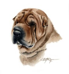 Watercolor art prints and originals by artist DJ Rogers by Watercolor Illustration, Watercolor Paintings, Painting Art, Watercolor Paper, Cachorros Shar Pei, Australian Shepherd Dogs, Watercolor Animals, Painting Inspiration, Lion Sculpture