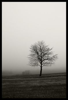 Tree Photography by d o l f i, via Flickr