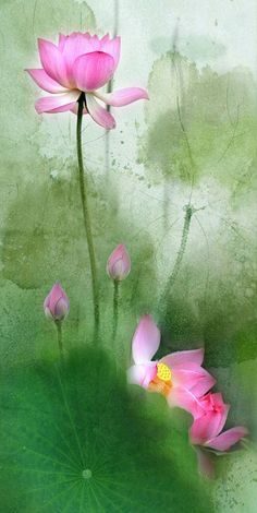 'cause without you I'm totally lost Watercolor Lotus, Lotus Painting, Watercolor Landscape, Watercolor Flowers, Watercolor Paintings, Lotus Flower Pictures, Flower Images, Flower Art, Art Lotus