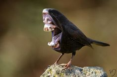 Humorous 'Hybrid' Birds With Freakishly Large Mouths And Teeth - DesignTAXI.com