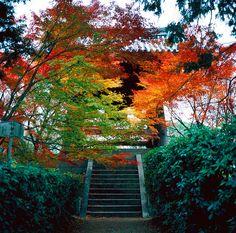 秋の幻彩 by sunnywinds*