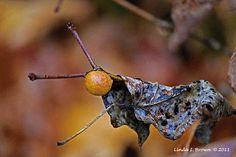 Oak-Apple Gall Creature Color Photograph Inspirational