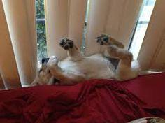 Resultado de imagen para perros dormidos