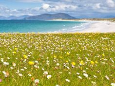 "UK: ""the machair, the long ribbon of meadows behind the beaches on the western side of the Western Isles. The beaches themselves are spectacular, broad causeways of brilliant white shell-sand fringing a blue Atlantic, and it is this sand which provides the machair with a substrate enormously rich in calcium carbonate and thus favourable to plant growth..."""