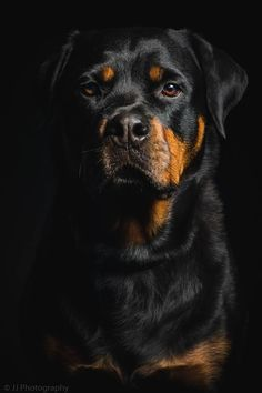 Rottweiler photograph by JJ Photography