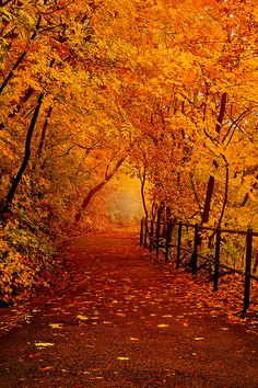 Forest in fall, Budapest, Hungary