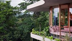 Stunning view set in rain forest. A wall of glass.