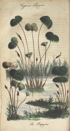 The illustrated botany :. New York :J.K. Wellman,1846-1847.. biodiversitylibrary.org/page/39675572
