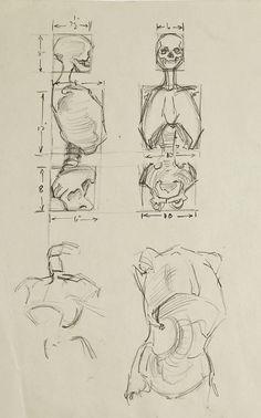 Anatomy Skeleton Study Drawing