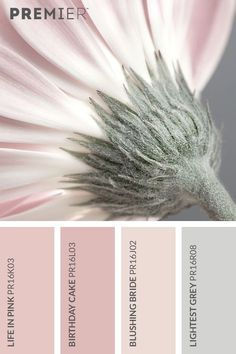 Soft and delicate flora colour palette. Life in Pink: Birthday Cake: Blushing Bride: Lightest Grey: Today let's do pastel pinks with palest greyA gorgeous feminine mood board with the flower as a beautiful representation of the palette.