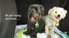 11/1 STILL WAITING FOR A NEW FOREVER HOME!!!  Bonded friends losing home