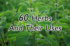 List of 60 different herbs and their uses. Pretty comprehensive list with both well known and lesser known herbs.