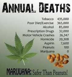 Weed: Safer than peanuts