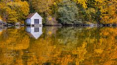 Autumn Reflections at The Coast - Trees in autumn colors reflecting in the calm water. New Experience, Reflection, Coast, Earth, Autumn, Wizards, House Styles, Water, Instagram Posts