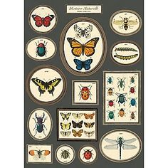 Cavallini Natural History Butterfly & Birds 2 Wrapping Paper