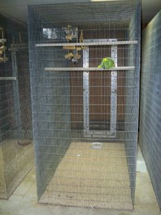 Pigeons cages for sale in bangalore dating