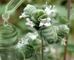 Herbalism, Hair Beauty, Plants, Herbal Medicine, Plant, Planets, Cute Hair