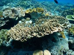 #Coral #BaliSea #Amed picture from our guest Pippa Howard