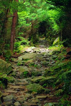 Great Smoky Mountains National Park, North Carolina, USA