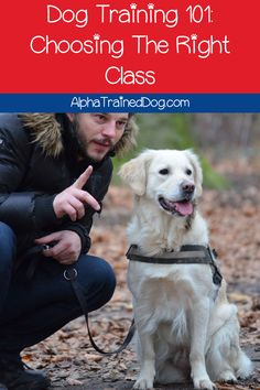 Need some help choosing the best dog training classes? Read on for our complete guide to the different types of classes and how to pick the best trainer! Dog Training School, Agility Training For Dogs, Dog Training Classes, Best Dog Training, Dog Agility, Training Schedule, Puppy Classes, Dog Search, Easiest Dogs To Train