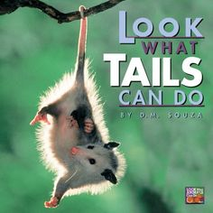 Look What Tails Can Do (Look What Animals Can Do)