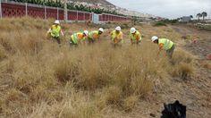 #Gesplan, freno al sector privado de #Canarias -